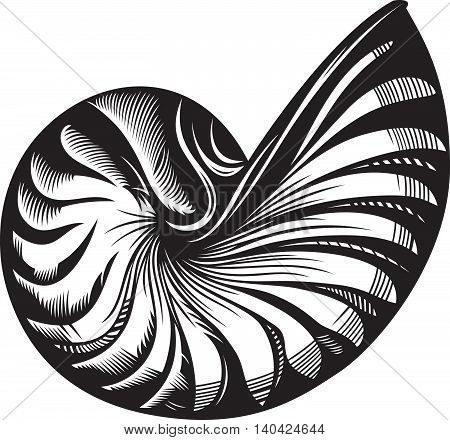 Vector illustration of sea shell. Black and white style
