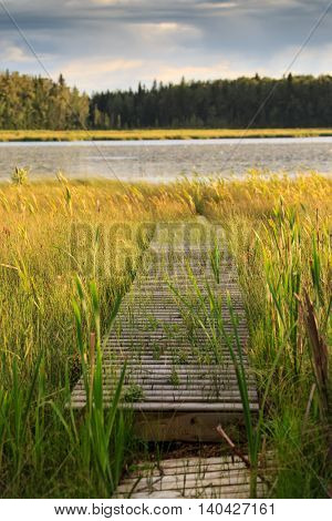 A wooden wharf going through the marsh at an Alberta lake.