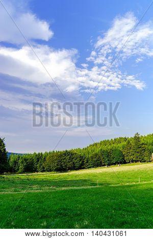 Green Grass On The Field, Summer Landscape