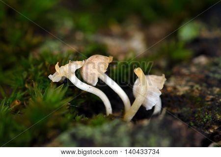 mushrooms in the wood in summer