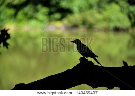 A bird stands on a tree branch in a park