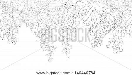 Seamless pattern with hand drawn bunch of grapes vector