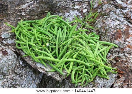 green beans summer garden vegetables food harvest