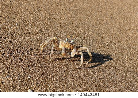 Crab sitting on sand, on the shore of the Mediterranean Sea