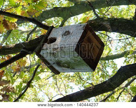 A bird feeder is waiting for the birds