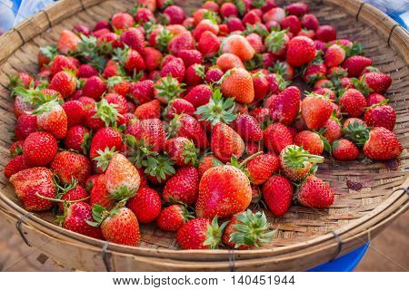 Strawberries red delicious is in one threshing.