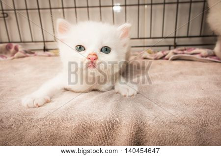 Cute kitty cat laying on soft  towel