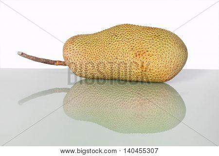 Unripe Artocarpus Integer or known as breadfruit or jackfruit