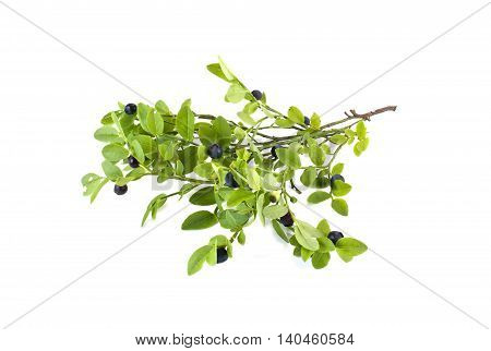 Ripe berries of plant whortleberry it is isolated on a white background