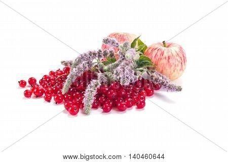 Ripe berries of garden plant red currant apples and flowering mint it is isolated on a white background