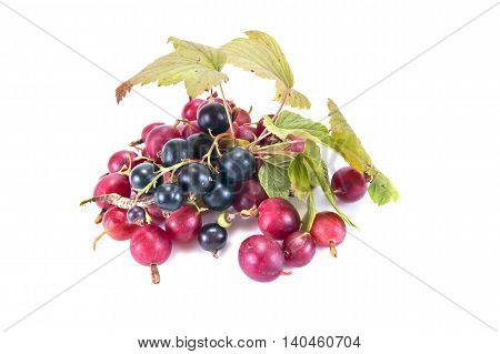 Ripe berries of garden plant blackberry and gooseberry it is isolated on a white background