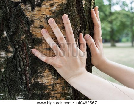 Hands on a birch tree trunk in a park