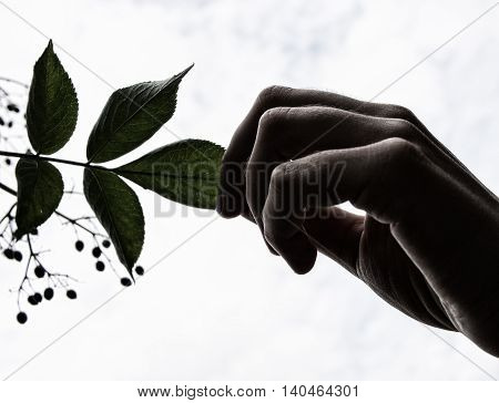 Hand holding a leaf of a tree