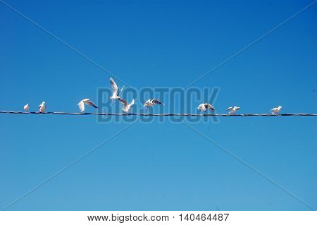 The Seagulls flying around the high-voltage wire