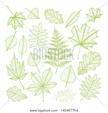 big set of green leaves of various trees. Hand drawing. Vector illustration