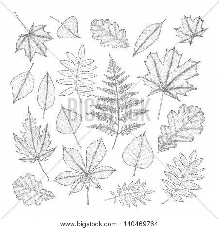 large set of gray leaves of different trees. Hand drawing. Vector illustration