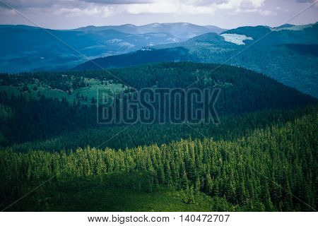 Amazing summer view on different trees in cloudy mountains. Blue and grey sky above wooded hills on background. Carpathians, Hoverla, UA