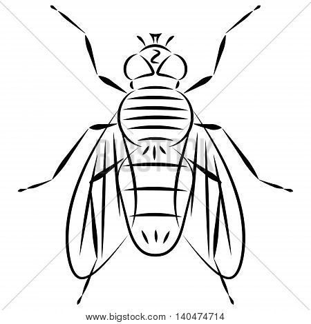 Doodle hand drawn abstract fly on white background