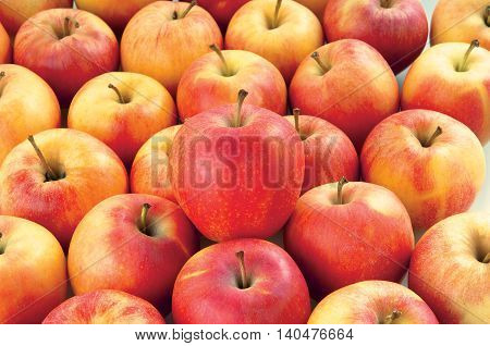 Red apples on a white background autumn fruits