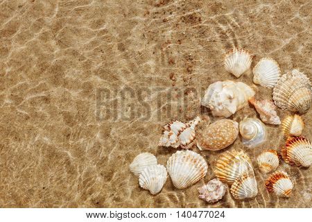 Exotic seashells on the seabed under water. Summer beach background. Top view copy space