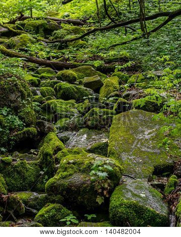 Moss Covered Forest In Great Smoky Mountains