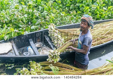 Farmer Is Picking Water Lily