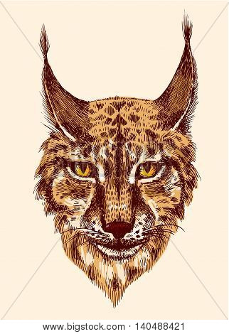 Head of beautiful lynx. illustration with head of wild cat with bared teeth. Hand drawn sketch. Ink painting. Design element useful for print for t-shirt.