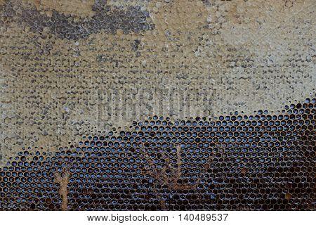 Beautiful Honeycomb With Honey, Background