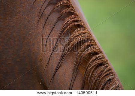 Closeup shot of horse mane after rain