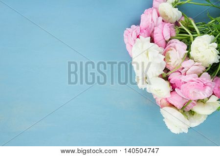Pink and white ranunculus blooming flowers on blue wooden background with copy space