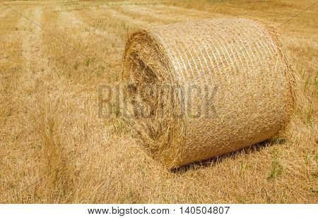 Harvested dry yellow straw roll on the farmland.