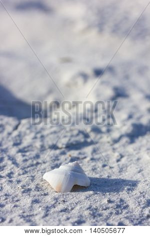 Close up of a white shell on a beach