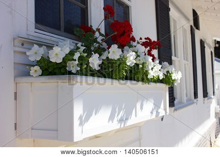 Red Geraniums and white Petunias in a planter out of a window