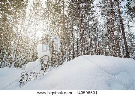 Beautiful untouched winter snowy landscape with sunrays