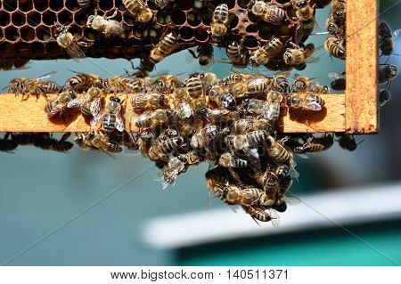 bee frames with bees for your design