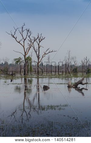 beautiful landscape in the Okavango swamps, Moremi game reserve landscape, Okavango Delta, Botswana