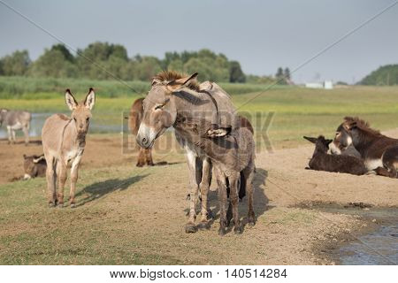 Donkey Family Moment