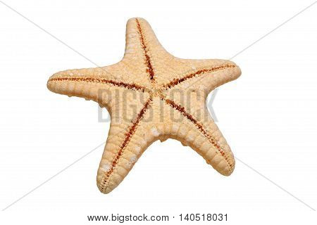 Back side of starfish isolated on white background with clipping path