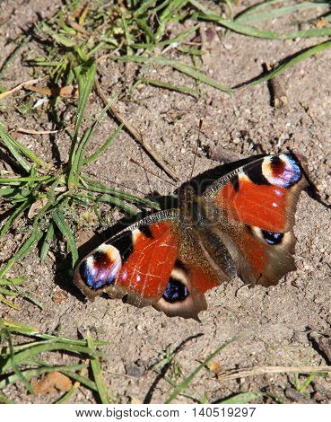 Butterfly on the ground on a shinny day