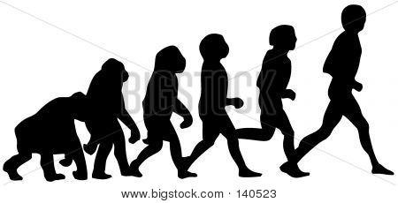 Human Evolution