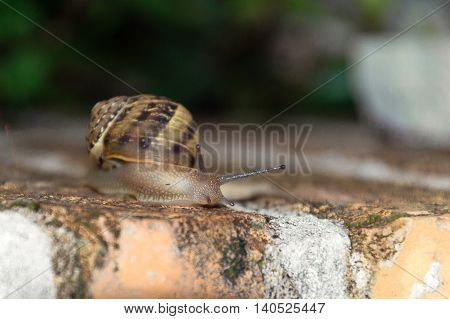 Snail clinging on a red and white brick wall