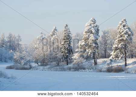 Winter at the Priory Park. Gatchina, Russia
