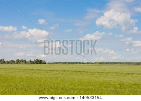 Green field on a background of blue sky with clouds and forest in the distance