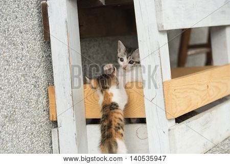 little kitty play with her sister