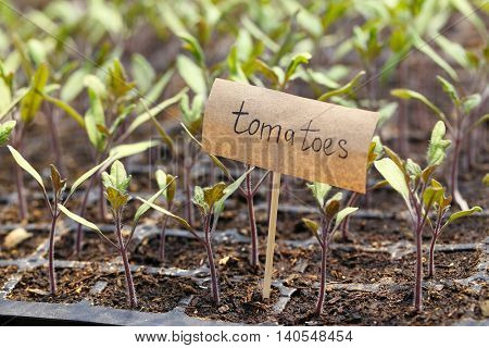 Young plants growing in greenhouse with nameplate
