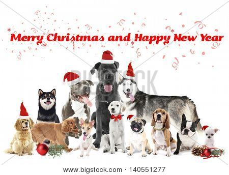 Funny christmas dogs. Merry Christmas and Happy News Year
