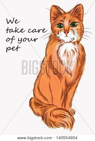 Illustration cat for advertising of products for animals and veterinary clinic. It can also be used as a logo or emblem of animal protection societies or organizations engaged in pet-range or working on saving abandoned animals