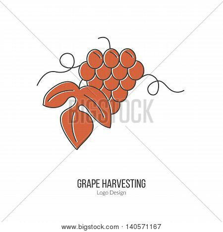 Grapes with leaf. Single logo in modern flat and thin line style isolated on white background. Outline winery symbol. Simple mono linear pictogram. Stroke vector logotype template.