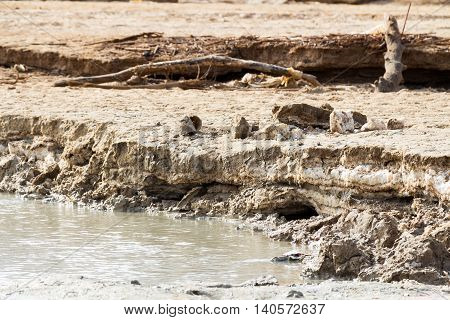 Layers of mud and salt of the Dead Sea