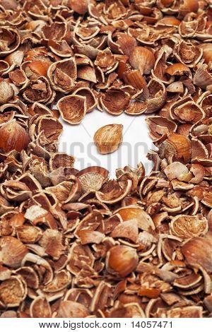 hazelnut kernel with shells